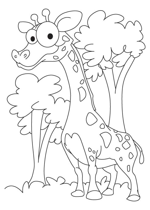 Mini Giraffe Coloring Pages