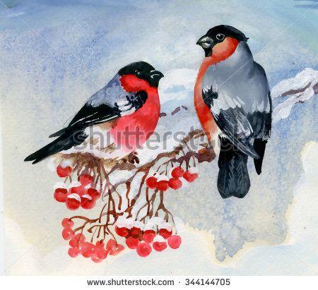 Стоковые фотографии и изображения снегирь | Shutterstock