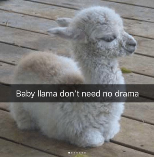 Die lustigsten Tiermemes (21 Bilder – Just Cute …