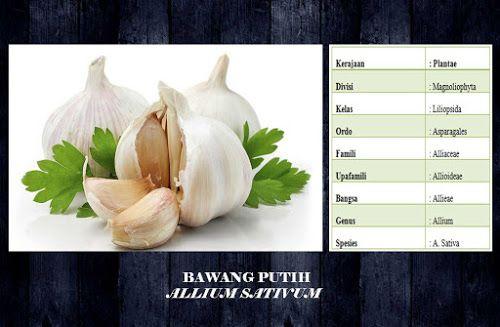 top ampuh: Manfaat Dan Khasiat Bawang Putih ( Allium Sativum) read more http://top-ampuh.blogspot.co.id/2016/02/manfaat-dan-khasiat-bawang-putih-allium.html