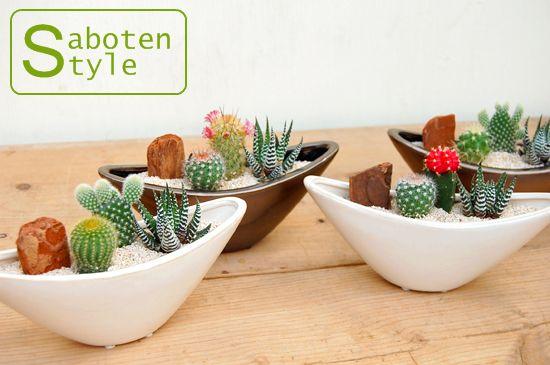 【サボテン・多肉植物 3種類 寄せ植え/ウェーブポットS】【楽天市場】