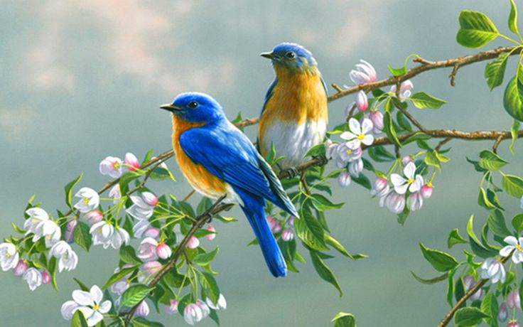 Flowers And Birds Hd Wallpapers Flowers Birds Trees