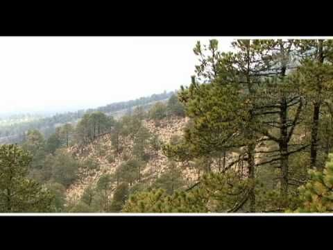 Ecopue - Ecosistemas: Parque Naciona La Malinche
