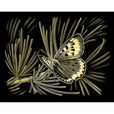 Scraperfoil - Gold - Butterfly