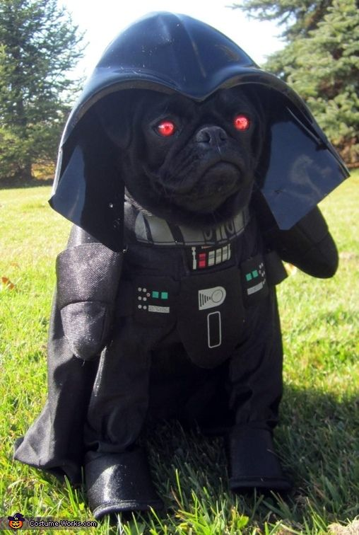 Bark Vader - 2012 Halloween Costume Contest