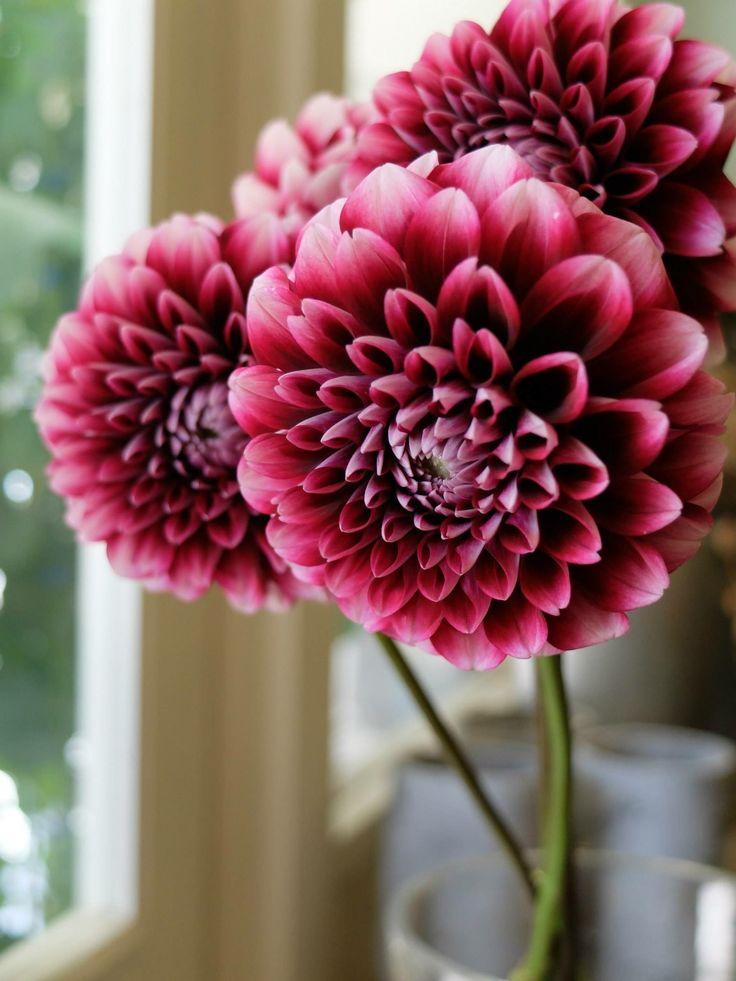 Pin by Florwhisper on Flower name Flowers, Flower names