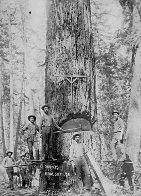 Logging in New Westminster, circa 1880