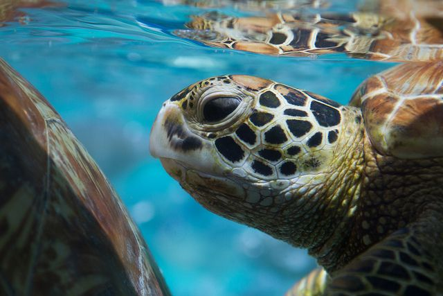 20 Great Pictures of Turtles | Tortue verte by twintopiste