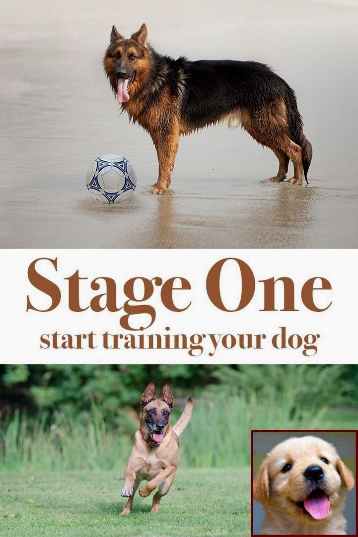 1 Have Dog Behavior Problems Learn About House Training Puppy Near Me And Dog Trainer Courses Online Training Your Dog Dog Behavior Dog Behavior Problems