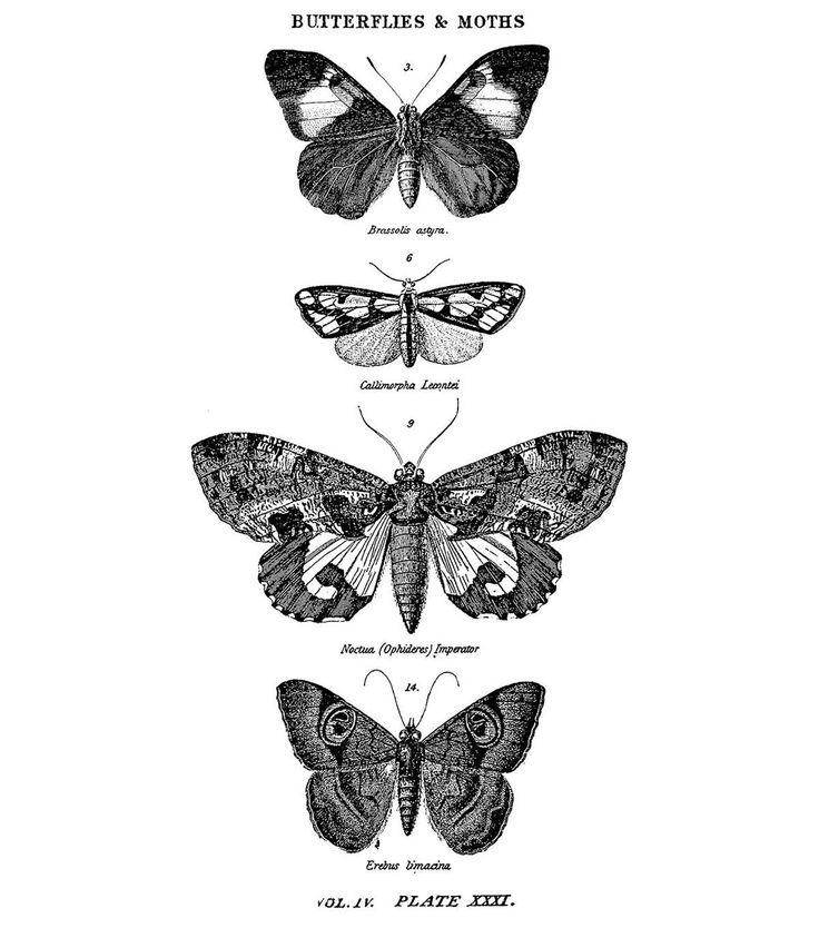 Tim Holtz Red Rubber Stamp-Butterflies & Moths 1