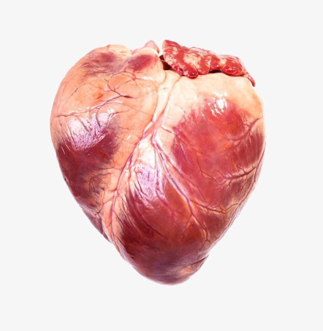Millions Of Png Images Backgrounds And Vectors For Free Download Pngtree Stock Photos Human Heart Photo Illustration