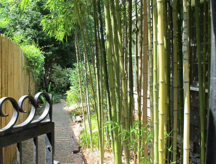 The 25+ best Planter bambou ideas on Pinterest | Jardiniere pour ...