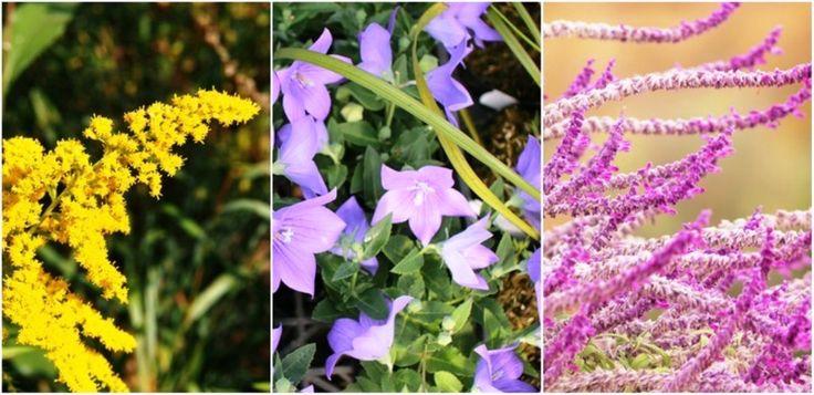 Mostani cikkünkben olyan évelő növényeket mutatok be nektek, melyeket most, ősszel érdemes elültetni azért, hogy csodálatosan szépek legyenek a későbbiekben!