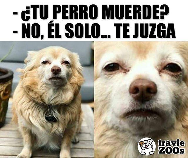 Eso Es Aun Mas Doloroso Perro Dog Mascota Mordida Animales Memes Perros Memes Divertidos Memes Graciosos