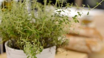 Kräuter umpflanzen
