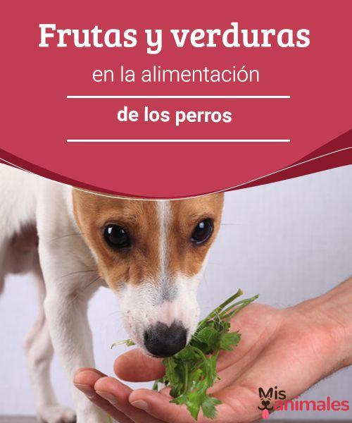 Frutas y verduras en la alimentación de los perros - Mis animales  Una dieta saludable en las mascotas favorece su calidad de vida. Encuentra aquí qué frutas y verduras se pueden incluir en la alimentación de los perros