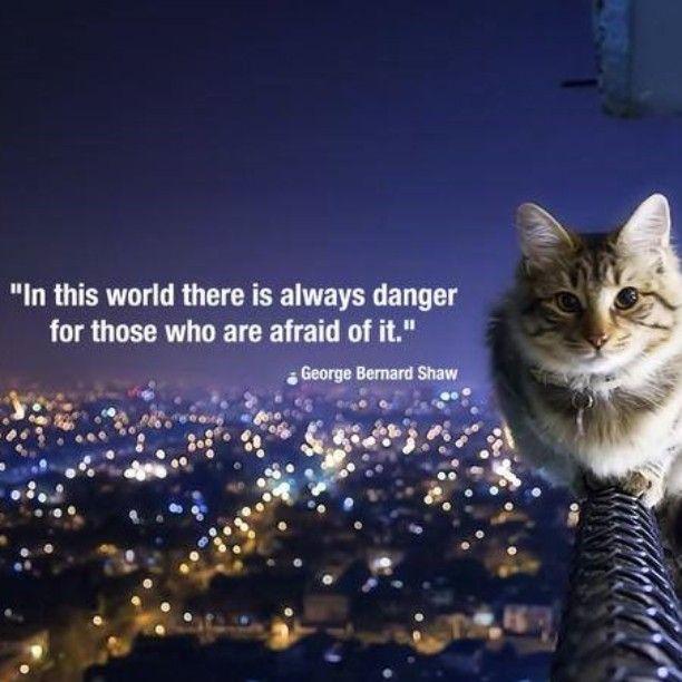 George Bernard Shaw #Quote