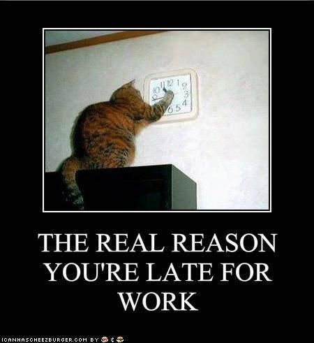 The Real Reason: Work, Cats, The Real, Real Reasons, Funny Cat, Funny Stuff, Humor, Funny Animal, Clocks