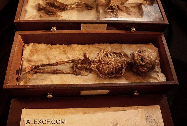 Maturation of Homo Vampyrus, Francis Gerber 1808      Faerie research bureau, Lord Merrylin...