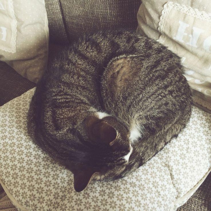#cat #love #cute #blogger #instagram http://ejnets.blogspot.com Instagram: ejnets