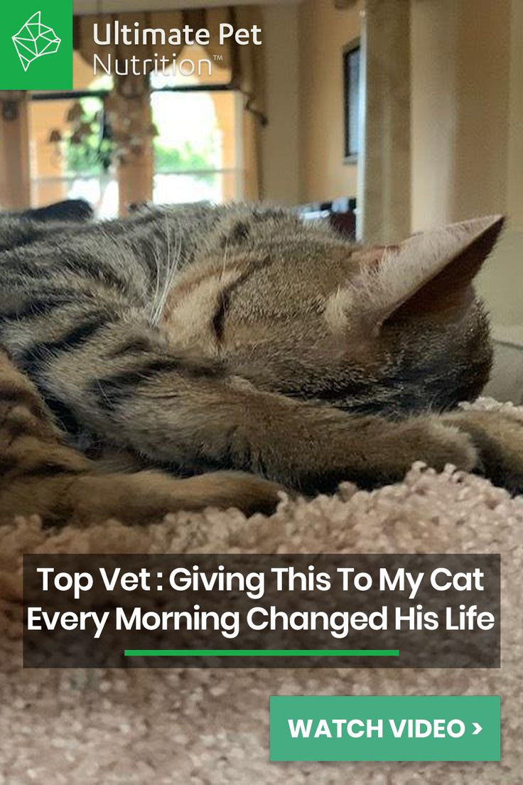 Aging Cat? Help Them Thrive With This. | Pets, Cats, Cat help