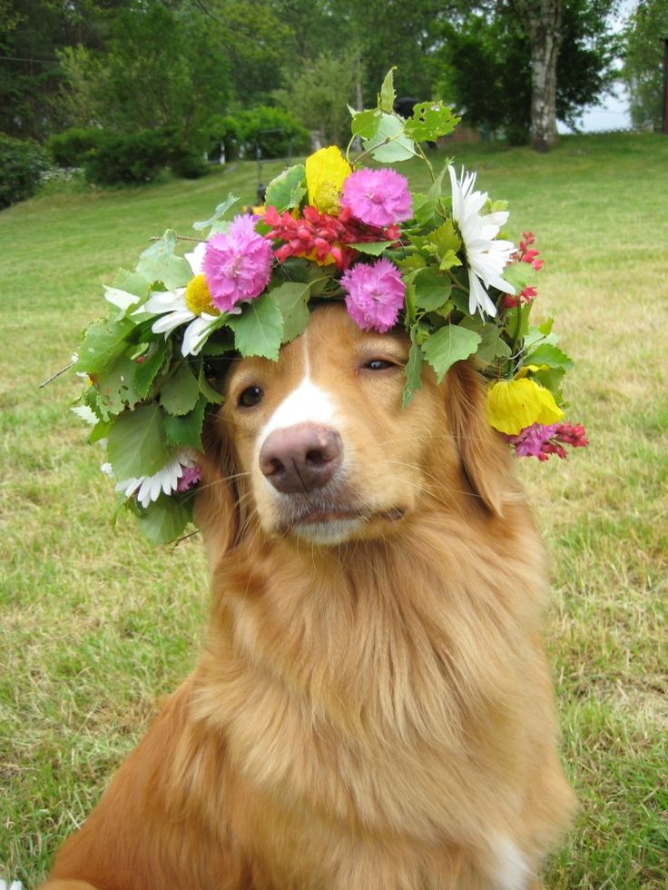 Rocking that flower crown for midsommarkrans