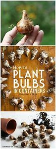 Plant Spring-Flowering Bulbs In Containers I started planting spring-flowering bulbs in containers after many failed attempts to stop the squirrels from stealing bulbs planted in the ground. If you'd you're...
