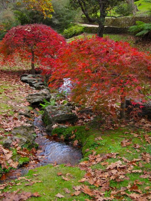 the everglades garden, Leura Blue Mountains in autumn