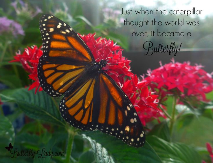 138 Best Images About Butterfly Inspiration On Pinterest