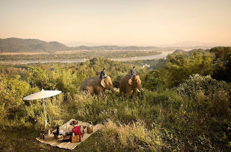Anantara is one of the most luxurious properties in Thailand and it also happens to be home to more than 20 elephants. | Photo: Anantara Golden Triangle Elephant Camp & Resort