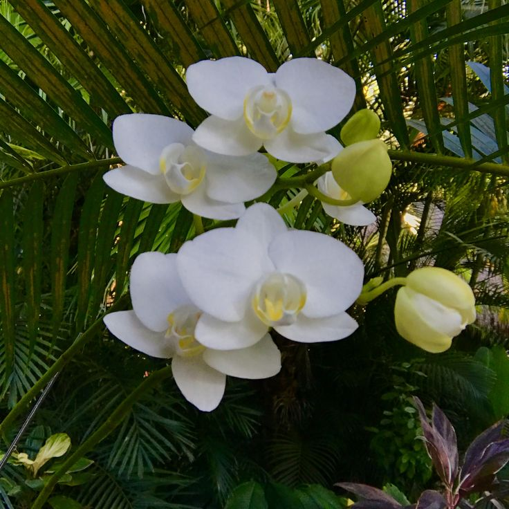 We have orchids through our tropical gardens at ikatan spa Noosa  https://ikatanspa.com/image-gallery/