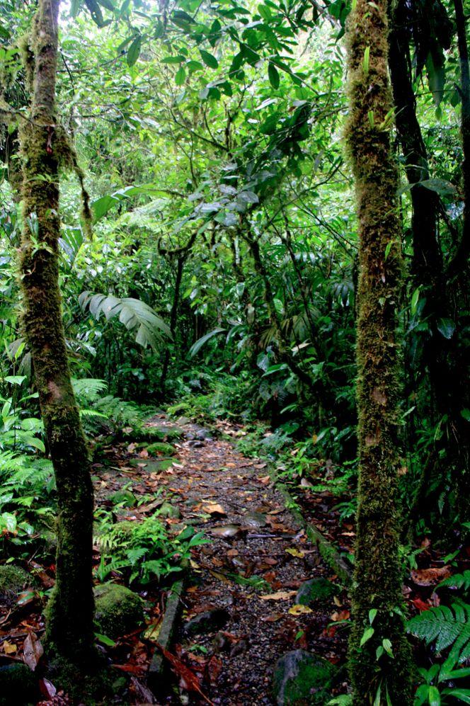 #Regenwald. Grün. Natur. Und du.