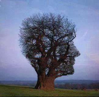 """Nice """"tree-face"""""""
