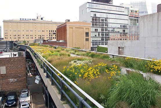 The grass-dominated and perennial flower-studded semi-natural habitat seen alongside many American highways is suggested by the plantings in this stretch of the High Line in New York City. Photo: Piet Oudolf