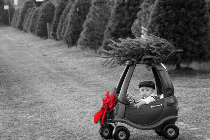 Baby / toddler Christmas photography / cozy coupe tree farm