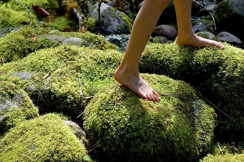 moss is so slippery and hard to walk on thus explaining my love for this photo