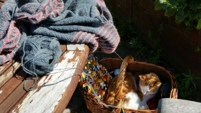 Knitting in the garden with my cat
