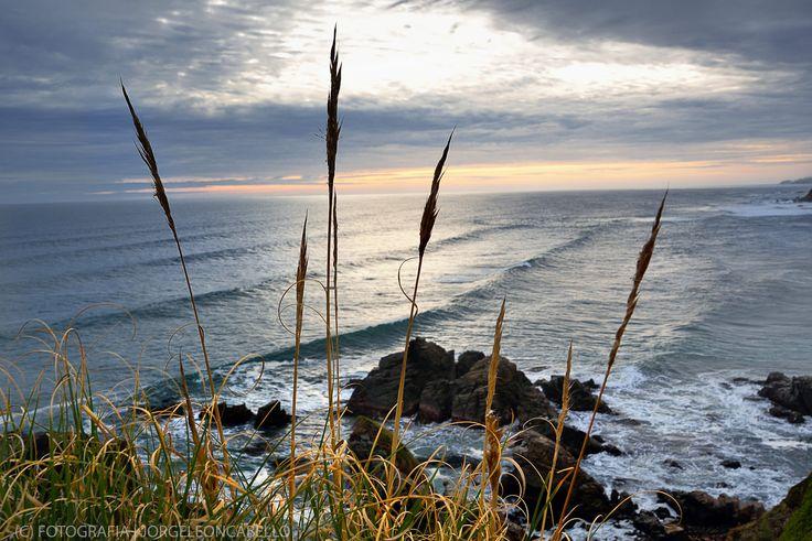 Espigas y olas - Llico Bajo (Patagonia - Chile)