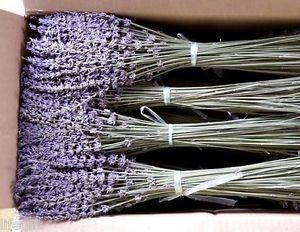 450stem 35cm tall Dried Lavender Bunch Home Wedding Decor Fragrant Flower Bunch