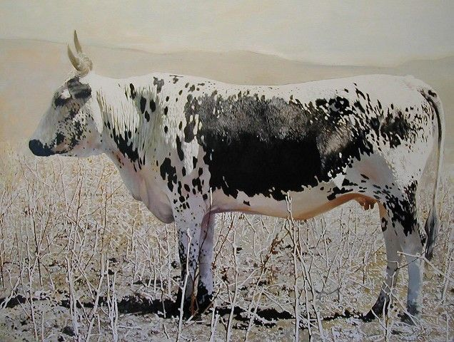 Nguni Bull by Leigh Voigt