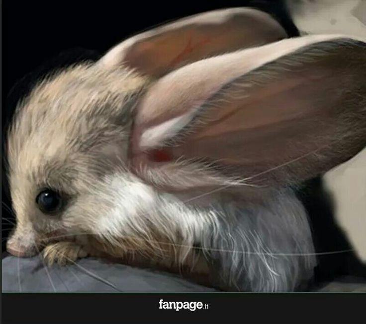 Animali rari.... Incrocio tra coniglio e topo