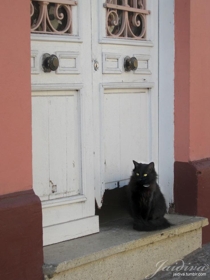 #GatoNegro #BlackCat #Cat #Door #Puerta #Valpo #Chile #House #Pink #Casa #Valpo #antiquedoor #antique #puertaantigua #pinkhouse