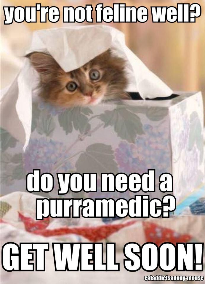 get well images with cats - Google Search