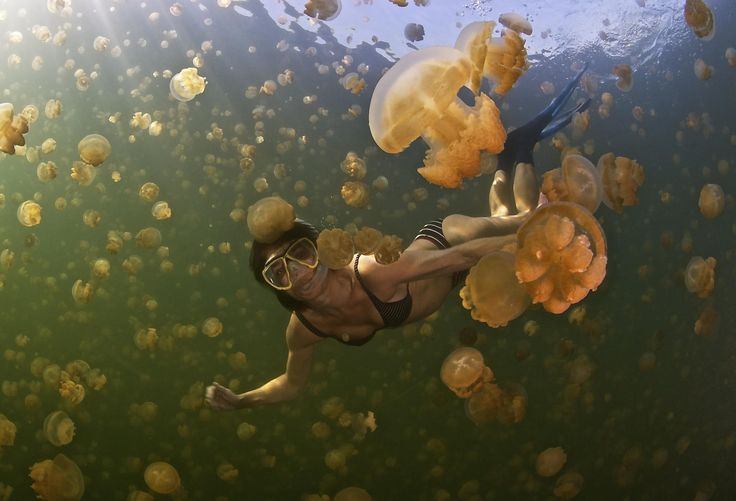 13 Fun Jellyfish Facts. - Random Facts