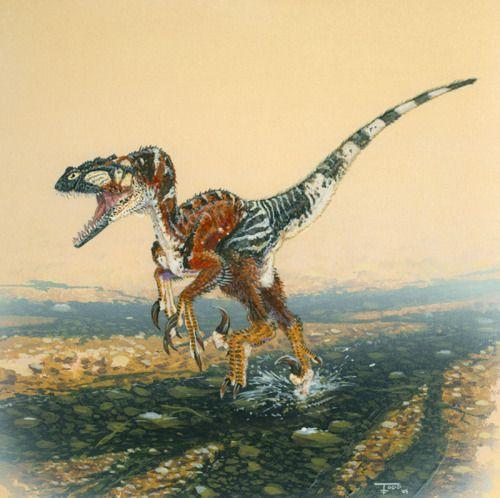 Utah Raptor