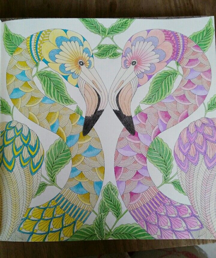Animal Kingdom Colouring Book Flamingo Millie Marotta Tropisch Paradijs Ingekleurde