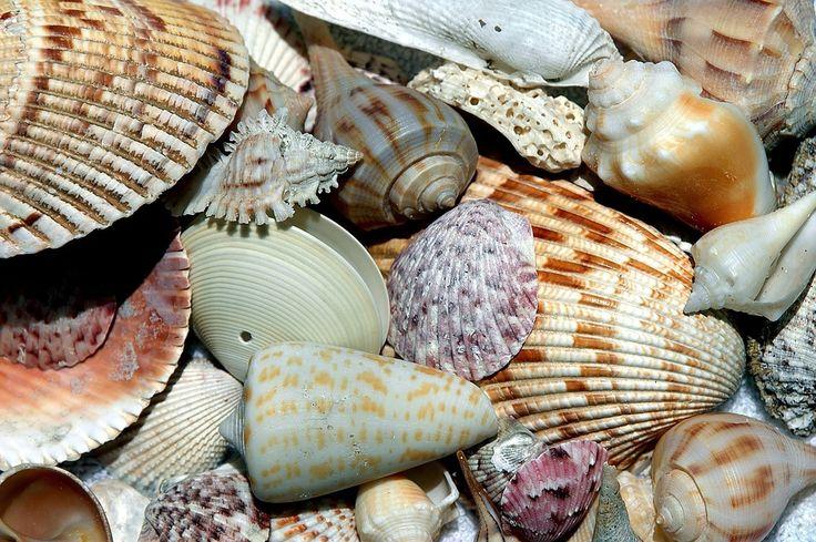 바다 조개, 셸, 해변 쉘, 패턴, 디자인, 수집기, 바다, 자연, 조개, 선박, 여름, 모래