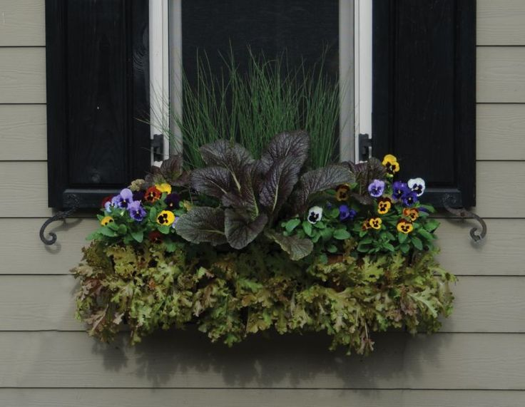 19 Best Window Boxes Images On Pinterest Flower Boxes