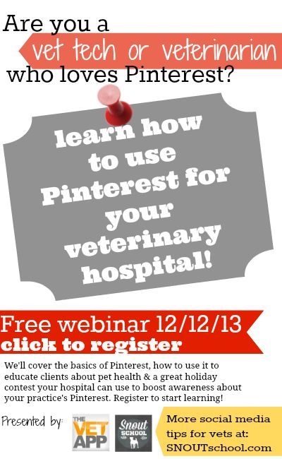 how to become a registered veterinary technician