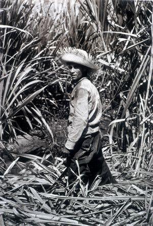 Portrait of a sugar cane cutter ~ Puerto Rico (Photo by Jack Delano, ca. 1940's